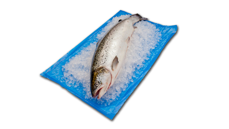 Seafood packaging solutions