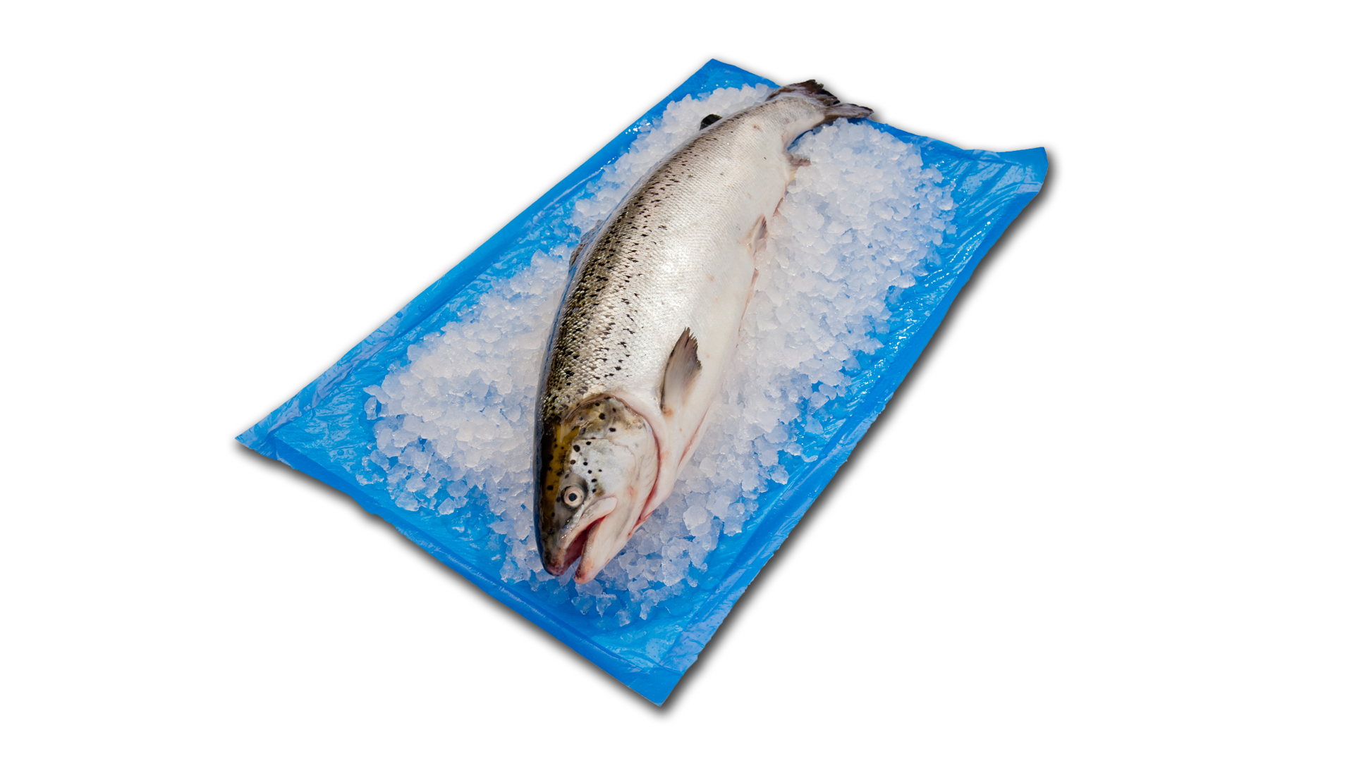 Dri-Fresh Sea-Fresh liners for seafood transportation