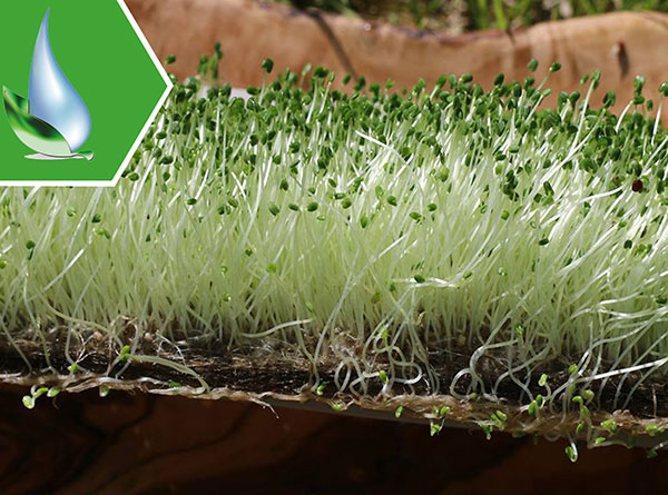 Sow & Grow Resolve Natural Growing Mats